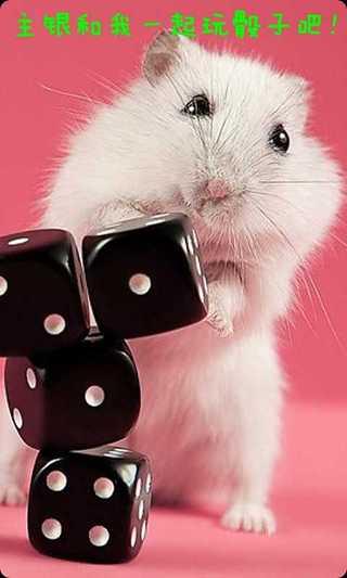 手机宠物可爱小仓鼠电脑版