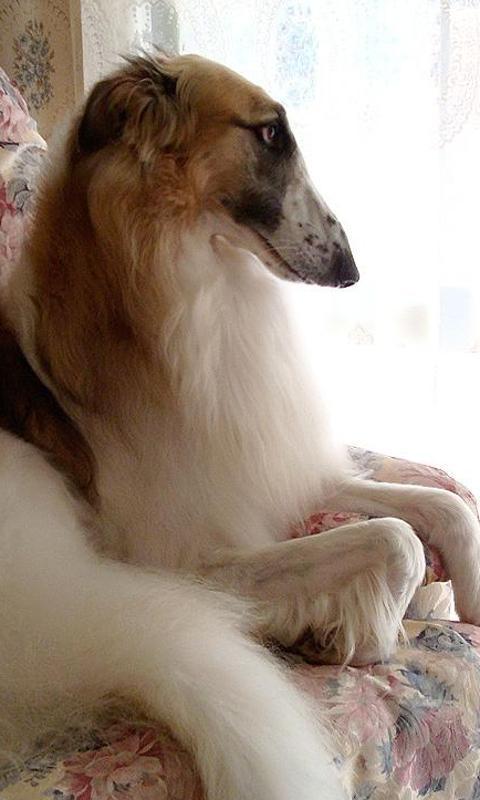 狗是世界上最迷人和可爱的动物,他们忠实地为人类服务了几百年.