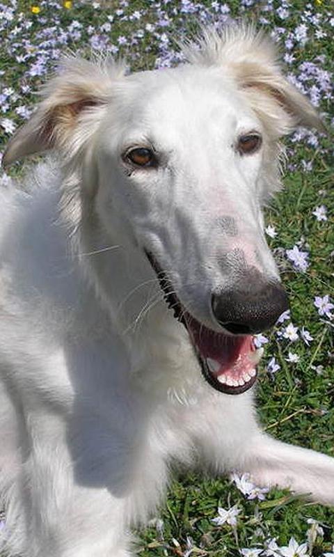 拉布拉多猎犬拼图好玩吗 拉布拉多猎犬拼图游戏介绍高清图片