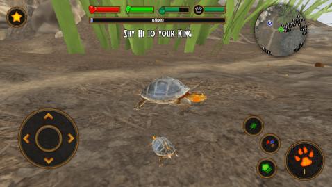 Box Turtle Simulator手游图片欣赏