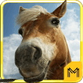 Horse Breeds and Pony Quiz HD