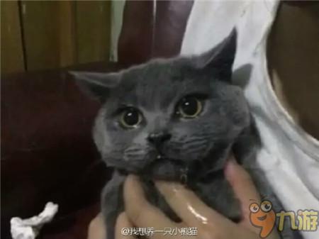 求 雨后的小故事 QQ表情
