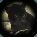 野生黑豹模拟
