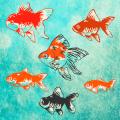 治愈系-金魚養成