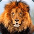 3D狮子模拟生存