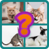 Animals quiz :Guess the animal name