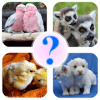 Animal Name: Male, Female, & Young (Animal Game)