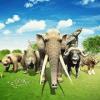Animal Kingdom Battle Simulator Games RTS 2019
