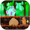 Rabbit - Jungle Adventrue
