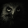 The Owl Killer