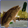 Toad Time Bass Fishing