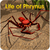 Life of Phrynus - Whip Spider
