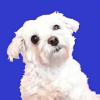 Adopt a Doggy Quiz  find a cute shelter dog