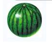3D西瓜滚球