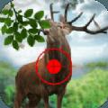 猎人的野生鹿