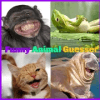Funny Animal Guesser