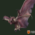 蝙蝠的粪便图片